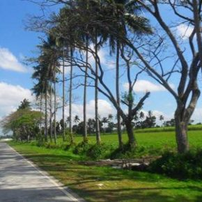 COMMERCIAL PROPERTY FOR SALE: Circumferential Road, Bacolod City